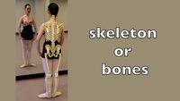skeleton or bones